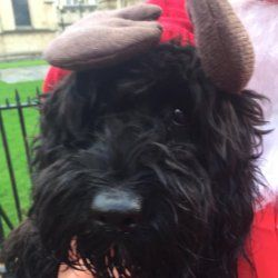 Gordon the Form 1 dog, completes the Santa Run