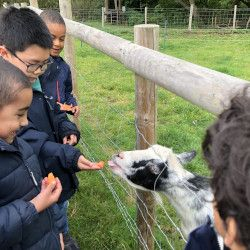 Form 2 Visit Cogges Manor Farm